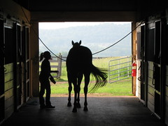 Girl and her horse (mts83) Tags: horse silhouette pennsylvania stable equestrian columbiacounty flickrestrellas