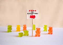 stop the killing. (*northern star) Tags: bear red orange verde green y