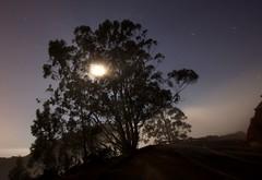Lonely foggy night (A Sutanto) Tags: california road longexposure moon tree fog night foggy lonely lunar marinheadlands