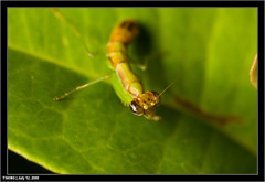 Morning Macro ! -1034 (yimING_) Tags: flower macro nature mantis spider singapore jumpingspider canonmpe65