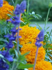 Flowers in Linnamäki