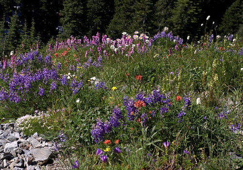summit wildflowers