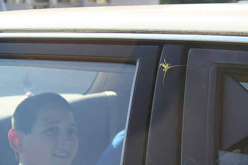 little green hitchhiker