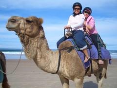 CIMG0336 (Queenbean79) Tags: beach camels portmacquarie
