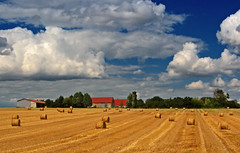Loire Farmland (edowds) Tags: blue trees vacation sky cloud holiday france field gold golden farm harvest july farmland valley crops 2008 loire 5photosaday abigfave anawesomeshot 15challengeswinner friendlychallenge