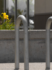 Flower and rack (Focal Intent) Tags: