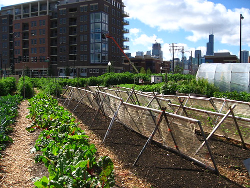 Picture of an urban farm in Chicago