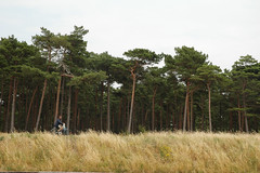 Biker (-Kj.) Tags: road summer holiday grass bike sweden bank biker pinetrees viewfromtheboat falsterbocanal falsterbokanalen