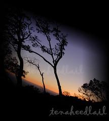 ـــده ــهــ][carmel][غلـطـــ وحـــ (تناهيد ليل) Tags: الغروب ظلام الظل كراميل أشجار الشفق غلطة تلال