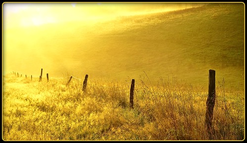 bei Dieringhausen - golden morning (by publik_oberberg)