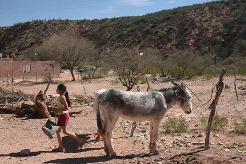 Mule + girl. Las Tambillas, La Rioja Province, Argentina.