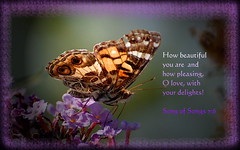 How Beautiful You Are... (honey 77) Tags: macro love nature beautiful butterfly insect outdoors wings colorful god jesus lord christian inspirational scriptures paintedlady delights bibleverse songofsongs nikond40 inspiks|inspirationalpictures