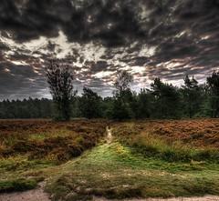Paths(Cropped version) (Joël Kiel Photography) Tags: morning trees tree ex nature netherlands photoshop sunrise early bomen forrest sony natuur sigma boom alpha 700 bos 1020 morgen hdr amersfoort treek vroeg zonsopkomst alpha700 minoltaamount