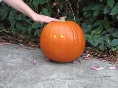 DarkPumpkin - 15