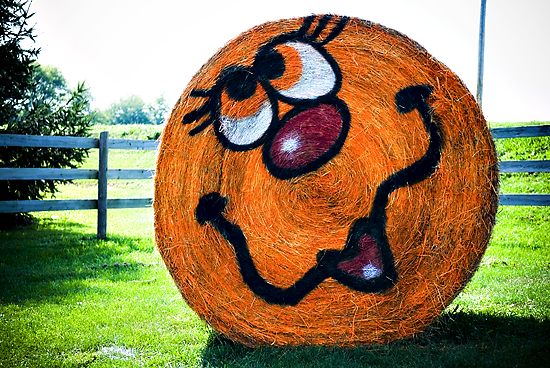 Painted Bales