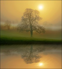 When two worlds collide (adrians_art) Tags: uk morning trees winter england sun mist nature water weather fog reflections landscapes bravo outstandingshots zarafa infinestyle megashot bratanesque bestofbratanesque creattivit mirrorser superstarthebest