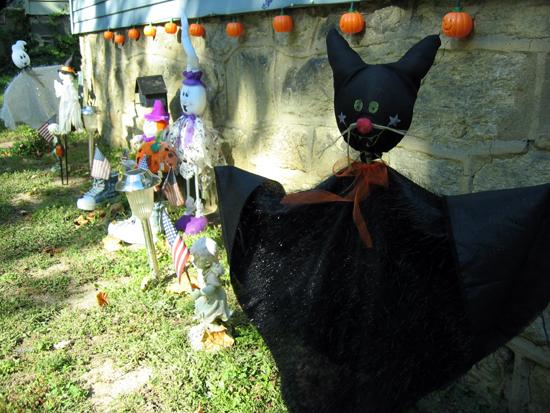 Black Cat (Click to enlarge)