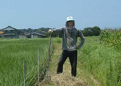 jerome woofer japan in organic rice field