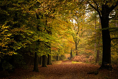 Autumn walk ((Erik)) Tags: autumn trees people girl leaves forest woods utrecht colours herfst nederland autumncolours bos wandeling boswandeling kleuren woudenberg autumnwalk k20d pentaxk20d dddbooster