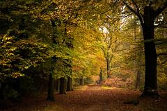 Autumn walk ((Erik)) Tags: autumn trees people girl leaves forest woods utrecht colours herfst nederland autumncolours bos wandeling boswandeling kleuren woudenberg autumnwalk k20d pentaxk20d dddbooster