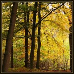 Foliage (Johan_Leiden) Tags: autumn trees fall nature leaves bomen colours herfst natuur denhaag foliage bos wassenaar najaar horsten landgoed dehorsten grouplife visiongroup spiritofphotography herstkleuren