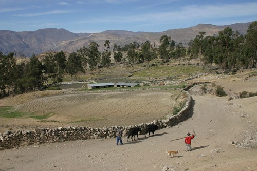 Herdsmen outside of Puquio, Peru.