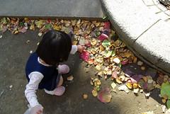 赤い葉っぱを集めてま〜す