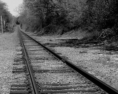 Long Island Tracks (**Ms Judi**) Tags: trees sky blackandwhite ny newyork beautiful grass leaves vanishingpoint sticks boards branch stones branches tracks ground longisland awsome wires poles lovely kingspark endless railroadtrack msjudi