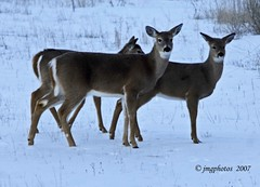 Mom & the Kids (jimgspokane) Tags: river deer idaho payette onlythebestare excapture