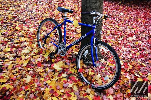 Bike ....