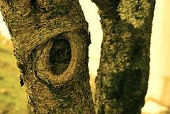 Butterflies and zebras... (tytanya) Tags: macro tree nature natureza trunk filters tronco rvore filtros