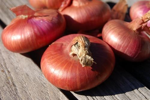 Cipollini Onions
