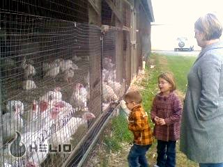 Family at the turkey farm