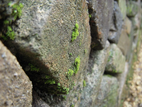 old wall - 3