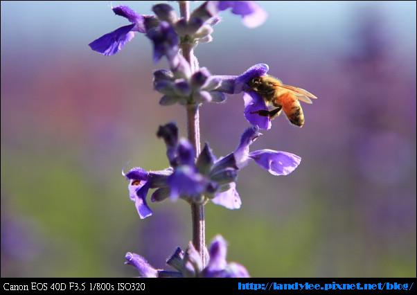 9711-新社花海:Date with Bee_037.jpg