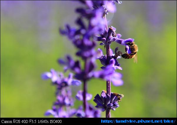 9711-新社花海:Date with Bee_047.jpg
