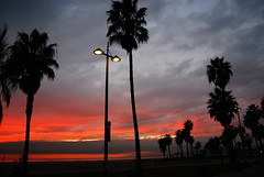 Looking Back At A Venice Beach Sunset (Geekstalt) Tags: california travel venice sunset red tree silhouette losangeles palm venicebeach tonemap