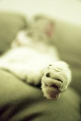 paw (poopoorama) Tags: alex cat paw nikon bokeh sigma d300 1850mmf28exmacrohsm