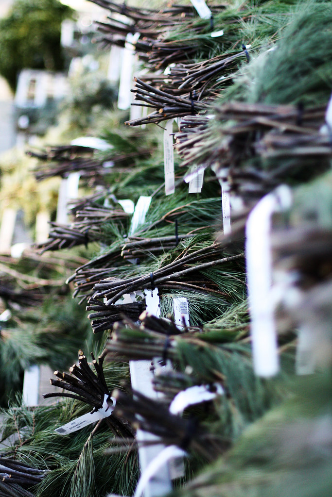 Boughs For Sale