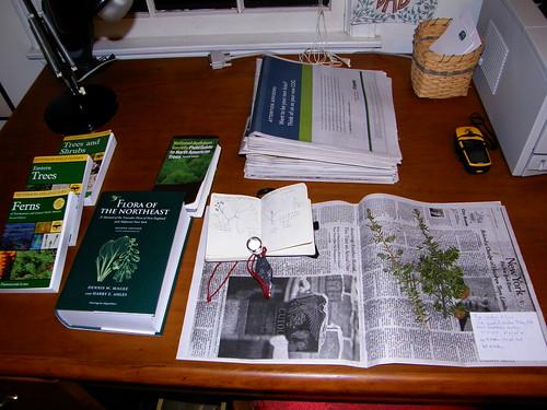 Herbario de Nueva Inglaterra