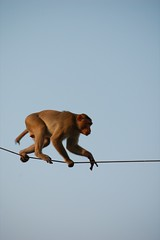 Monkey On A Wire