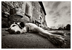 Rural dog (Saur) Tags: dog rural pages perro gos montnegre thelittledoglaughed