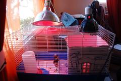 chook cage exterior wallside