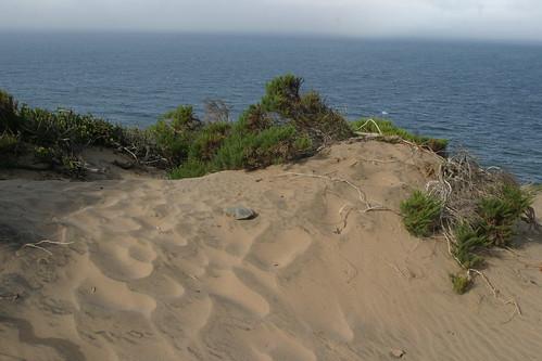 Dume dune
