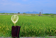 Good Bye Summer Vacation (yoshiko314) Tags: summer vacation green net field kyoto rice peaceful ricefield 2009 d60 1855mmf3556gvr