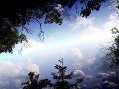 Summer Sky Blinding With Awesomeness, Livonia MI (Burdette's Shaggy Shots) Tags: livonia mi michigan clouds sky blue trees nature shaggyburdette white natureandnothingelse eliteimages flickraward i96 spiritofphotography beautifulphoto flickrestrellas mygearandmepremium mygearandmebronze thegalaxy soe