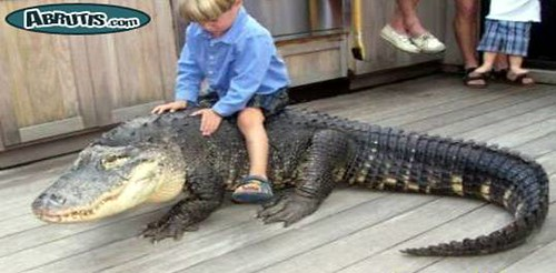 alligator rider.jpg