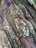 lichen r2