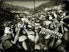 The Dolphin's solitary death diptych (Mayastar) Tags: scotland diptych trashbit mayastar dolphinsbones aboutdeath