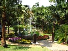 livistonea mal (rhmn) Tags: lake palms landscaping kuala plans ideas lumpur perdana livistonia maldivica
